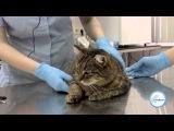 Как подстричь когти коту / кошке