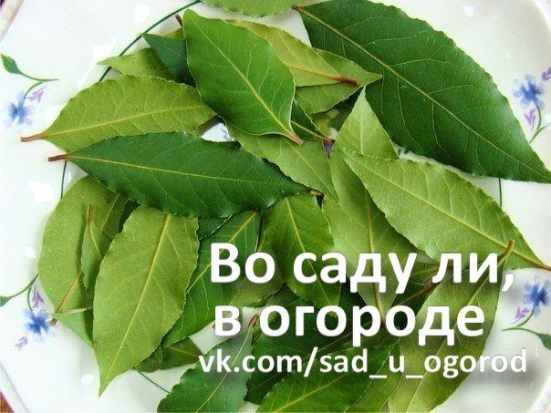 https://pp.vk.me/c7008/v7008678/4c906/pV4-Emvj5rI.jpg