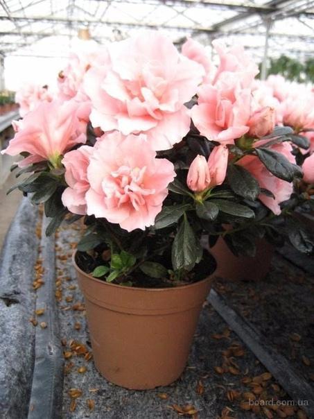 растения-кондиционеры о пользе домашних растений можно говорить бесконечно. домашние цветы не только создают уют в вашем доме, являясь частью интерьера, но при помощи домашних растений можно