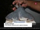 В США поймали двухголовую акулу !!!