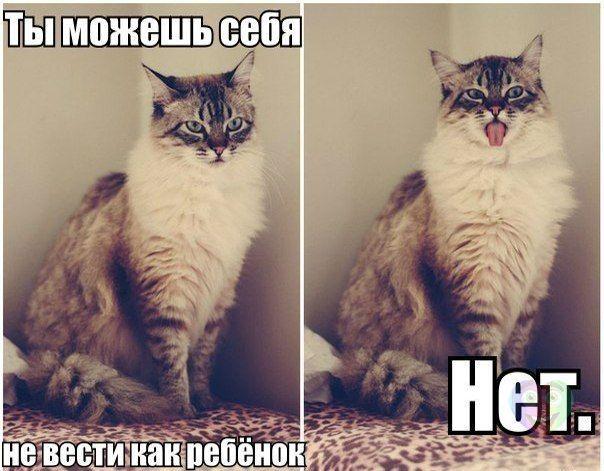 Смешные кошки коты и котята