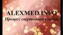 Процесс свертывания крови Плазменные и клеточные факторы свертывания крови