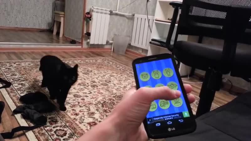 Разговариваю с котом через кошачий разговорник.