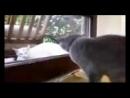 V-s.mobiСмешные коты! Забавная подборка про котов чудаков 2016 ! Funny cats! Funny compilation about cats ec.3gp