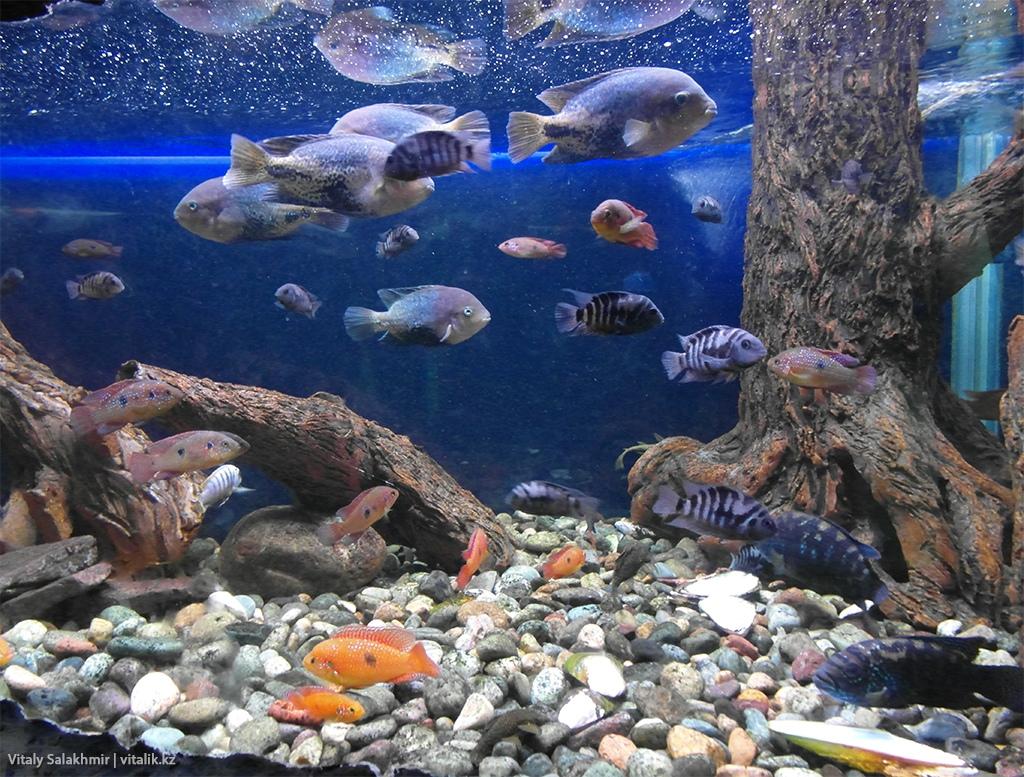 Рыбы в аквариуме зоопарка Алматы 2018