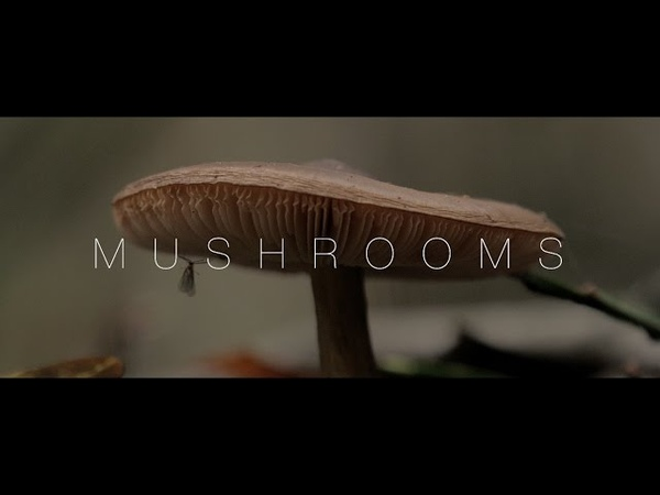 Mushrooms | 4K (Panasonic G7 14-140 f3.5-5.6 II).