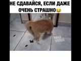 Очень злой котик /Very evil kats