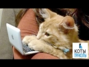 Смешные КОТЫ С прикольной ОЗВУЧКОЙ ПРИКОЛЫ про кошек часть 5