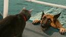 ПОПРОБУЙ НЕ ЗАСМЕЯТЬСЯ - Смешные Приколы и фейлы с Животными до слез, смешные коты 72