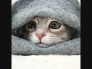 вот так согреваться этой холодной зимой