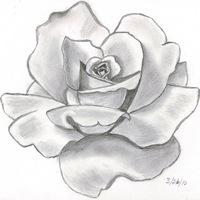 картинки нарисованные простым карандашом картинки