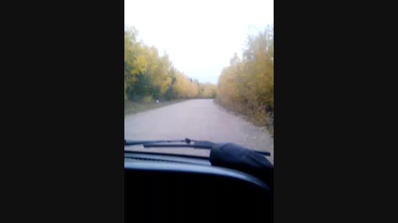 Дорога в золотую осень