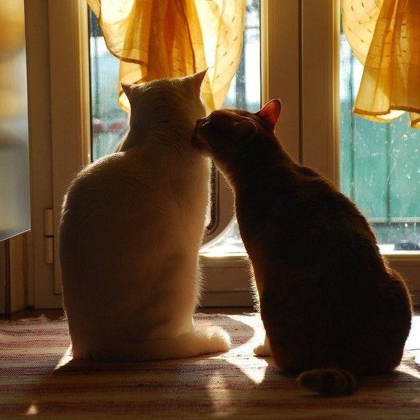 Кошки и прочие забавные животные  - Страница 3 VMxnxKf0SqQ