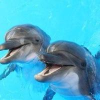 дельфины фото морские