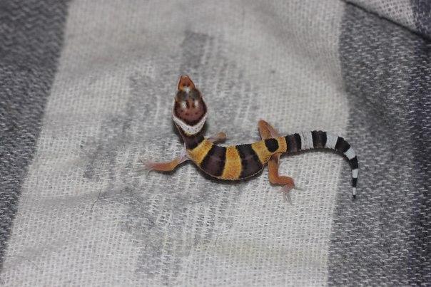 Различные рептилии MhlevZ6g34c