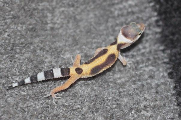 Различные рептилии 2_5jcDhu0rw