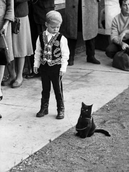 Котик со своим хозяином в очереди на кастинг черных котов, 1961 г.