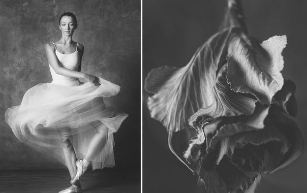 Чёрно-белый проект фотографа Юлии Артемьевой Балерина и цветы попал на страницы зарубежных изданий Балерина из Нижнего Новгорода Марина Мастыка выступила в роли модели. Юлия Артемьева просила