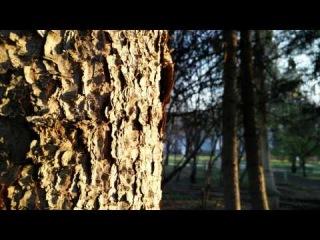 Небольшое 4k видео с камеры Oppo Find 7a