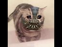 Girl i miss you *sad* :( cat shitpost meme