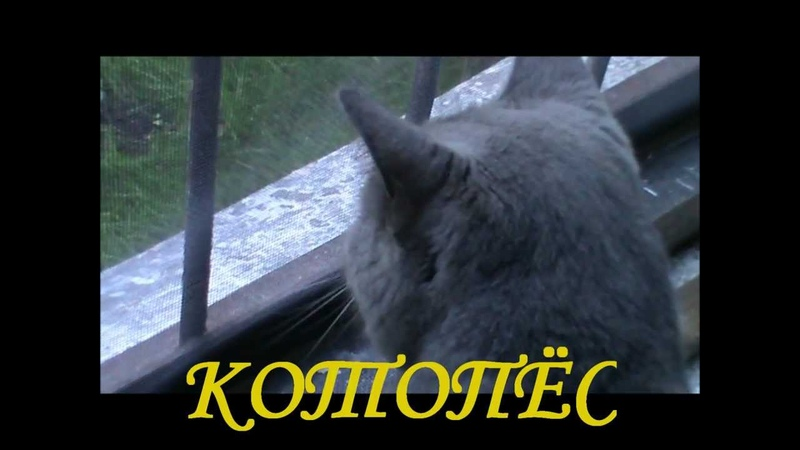 котопес, или котёнок по имени Гав...