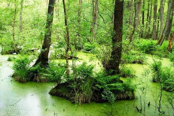 Зелёное болото. Опасная зона LMdQDR-8pSo