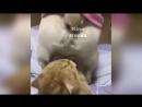 жестокая любовь kino remix 2018 угар ржака до слез бульдог смешные приколы с животными кот сам напросился