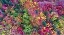 [ORIGINAL!] Utah Fall Colors at Snowbasin by Drone