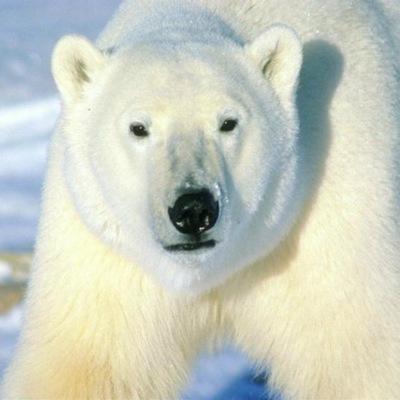 Белый Медведь, 13 марта 1993, Киев, id219134502