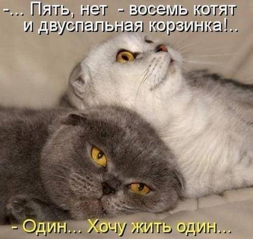 http://cs317716.userapi.com/v317716661/4fab/I6CfPAFXLBk.jpg
