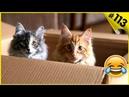 Смешные коты - Приколы про котов Приколы про кошек 113 Супер смешные кошки