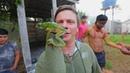Ядовитая лягушка и традиции племени Шанинауа Бразилия Мир наизнанку 10 сезон 4 выпуск