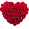 Доставка цветов, роз Новороссийск! Оптовые цены!