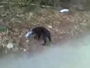 глупый щенок с ВИЗа (Екатеринбург)
