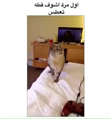 "OSAMA HRB on Instagram: ""اول مرة اشوف قطه تعطس! منشن حد يعطس زيه1575"