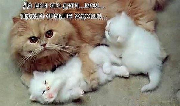 Красивые открытки животных