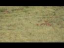Охота Сурок 180 метров