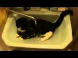 Кот принимает душ в раковине Юмор! Прикол! Смех