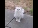 Weird Looking Fucking Cat