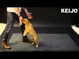 Как собаки реагируют на летающую сосиску?