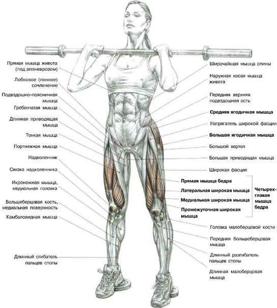 Упражнения на объем бицепса бедра