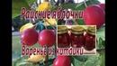 Райские яблочки Варенье из китайки
