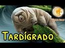 Tardígrado ou Urso D'água: Sobrevivência no Espaço (ENG subtitles)   Ciências Gerais