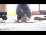 Двигай телом - cat twerk trap