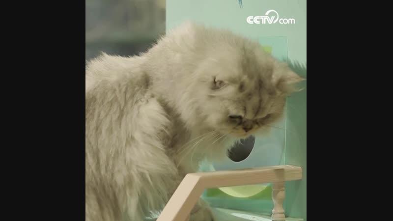 Почему тело кошек очень гибкое