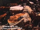 Окаменевший лес в Матарука Бане по угрозой