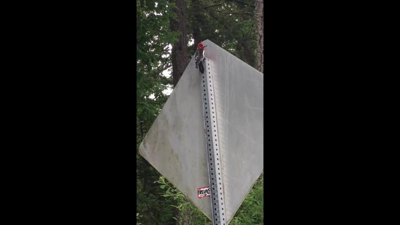 Stupid woodpecker
