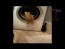 Очень смешное видео про кошек. Такие скромные и веселые кошки