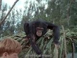 Флиппер ENG SUB - 1 сезон 24 серия Flipper S01 E24 - Flipper And The Elephant Part I (1964-1965)