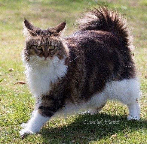 Типичный кот QwWHtsB2JbA